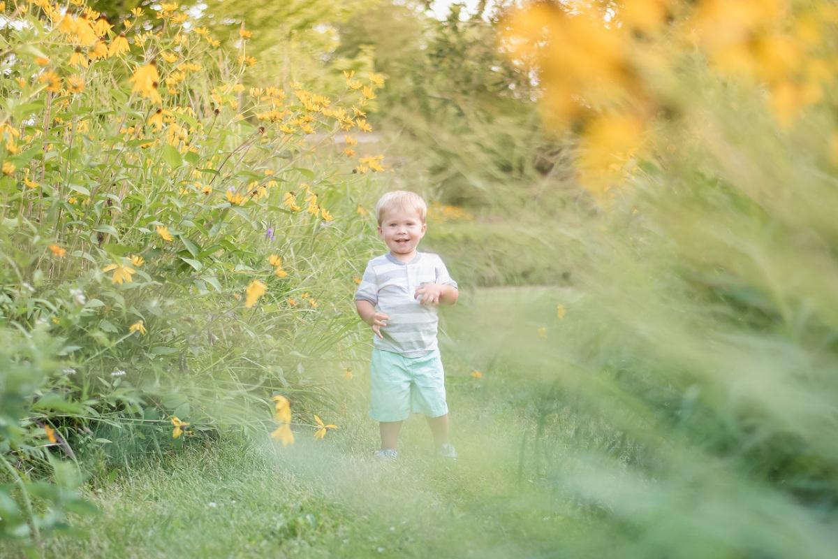 little lads 2 year old boy summer in field of flowers