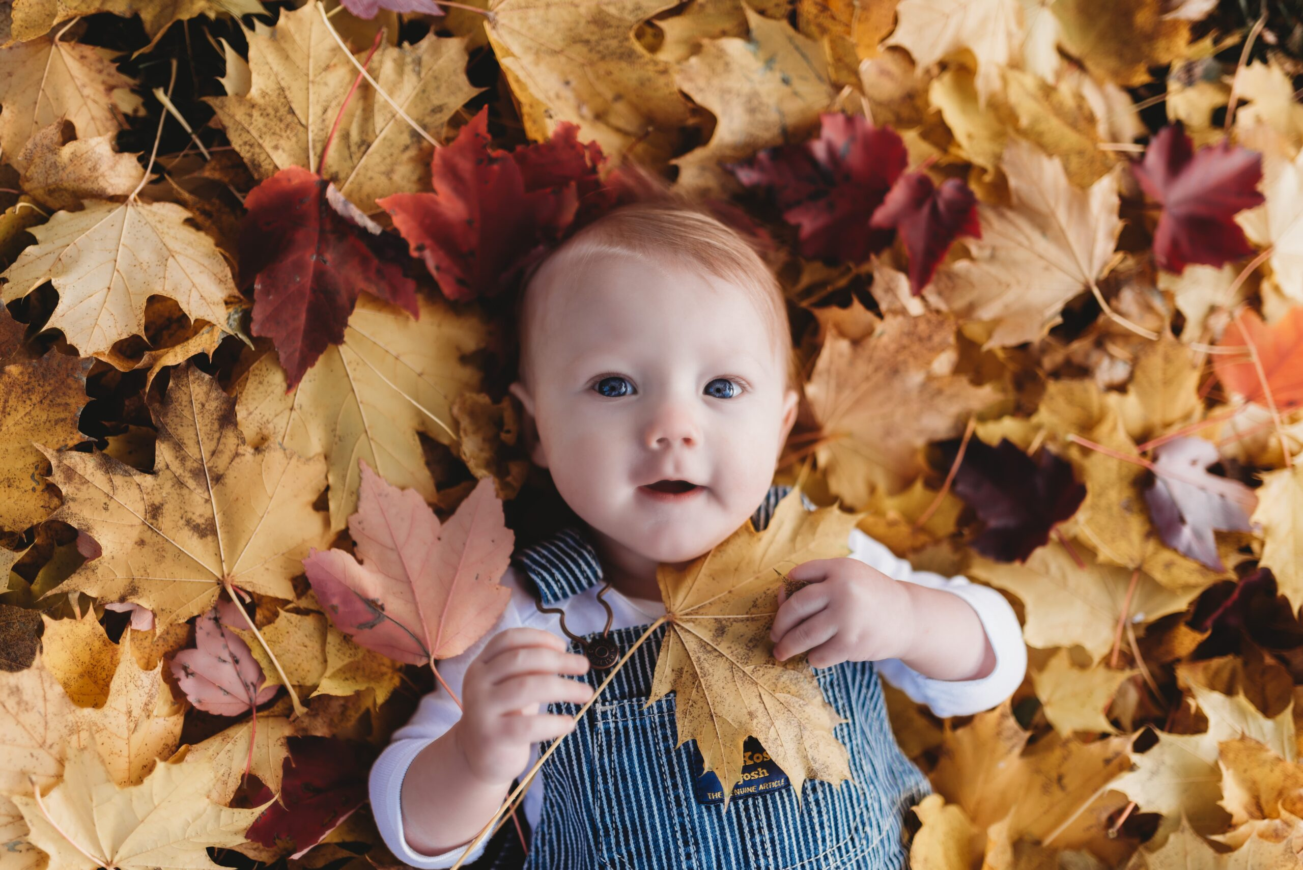 6 month old baby boy laying down in a pile of autumn leaves holding a yellow leaf