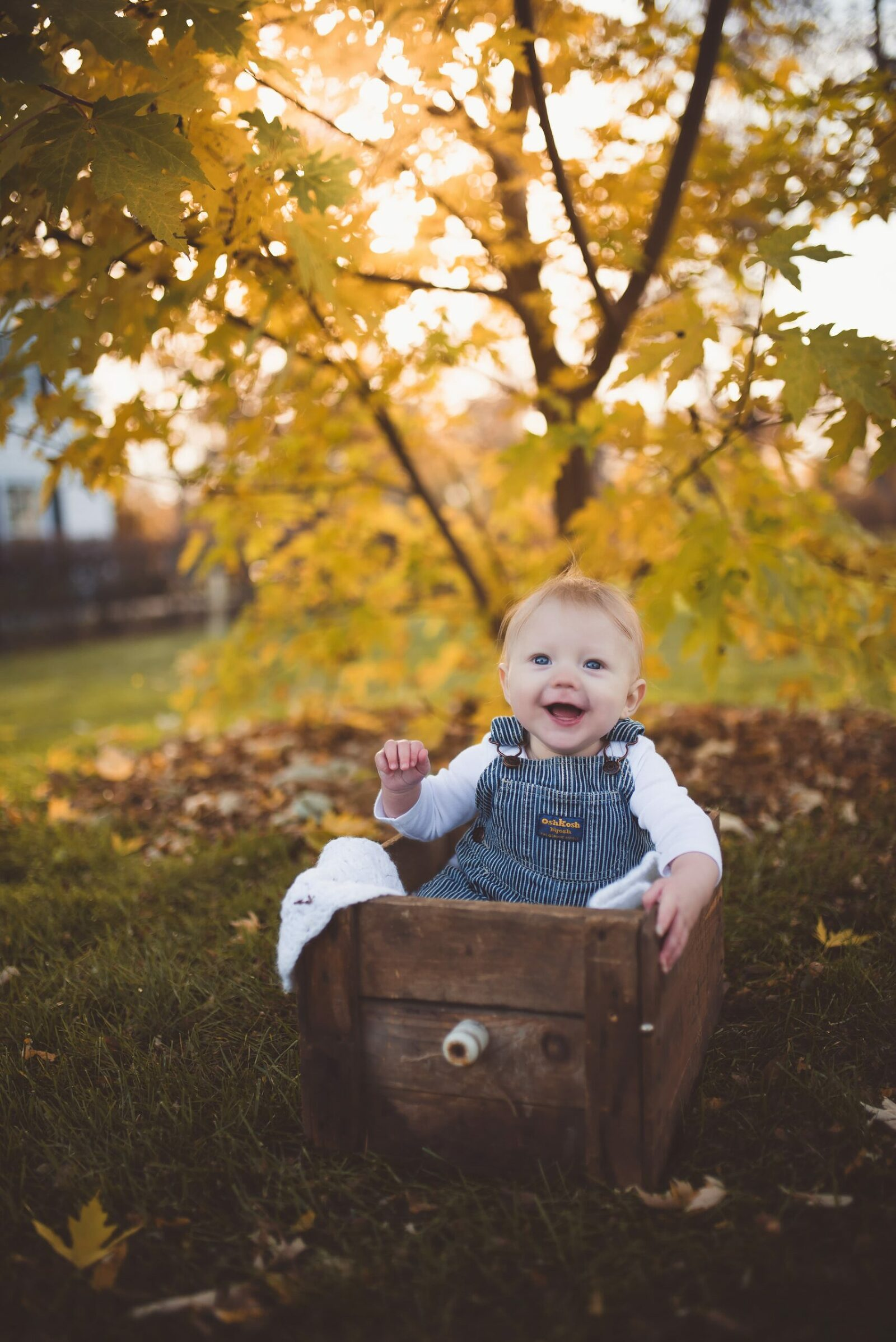 6 month old baby boy in vintage wooden box with autumn leaves in the background