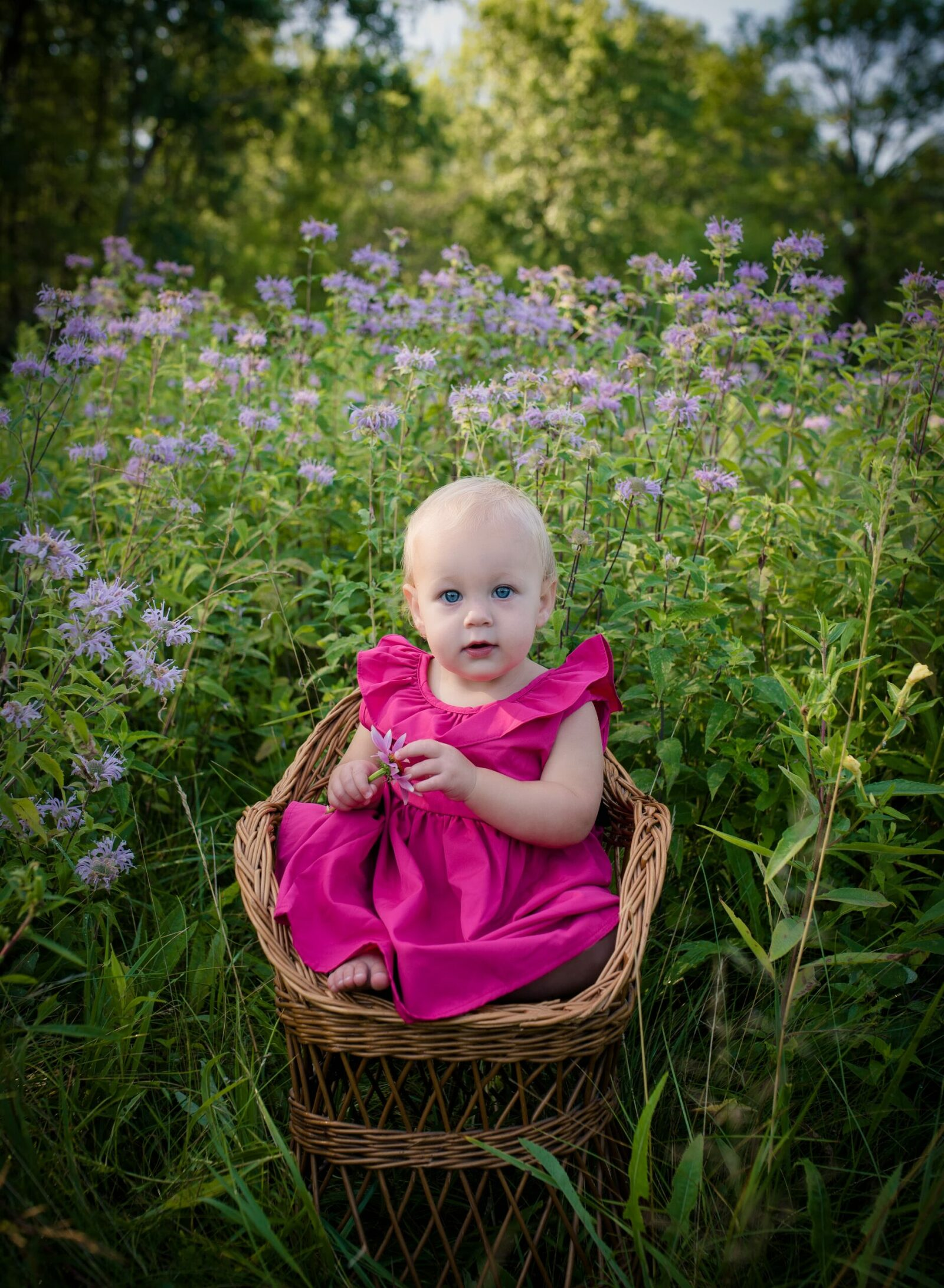 one year old girl in bright pink dress sitting on whicker chair in field of purple flowers